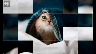 Пазлы котята Android Puzzle cat
