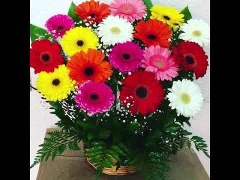 Gerberas Floreria Arreglos Florales Df