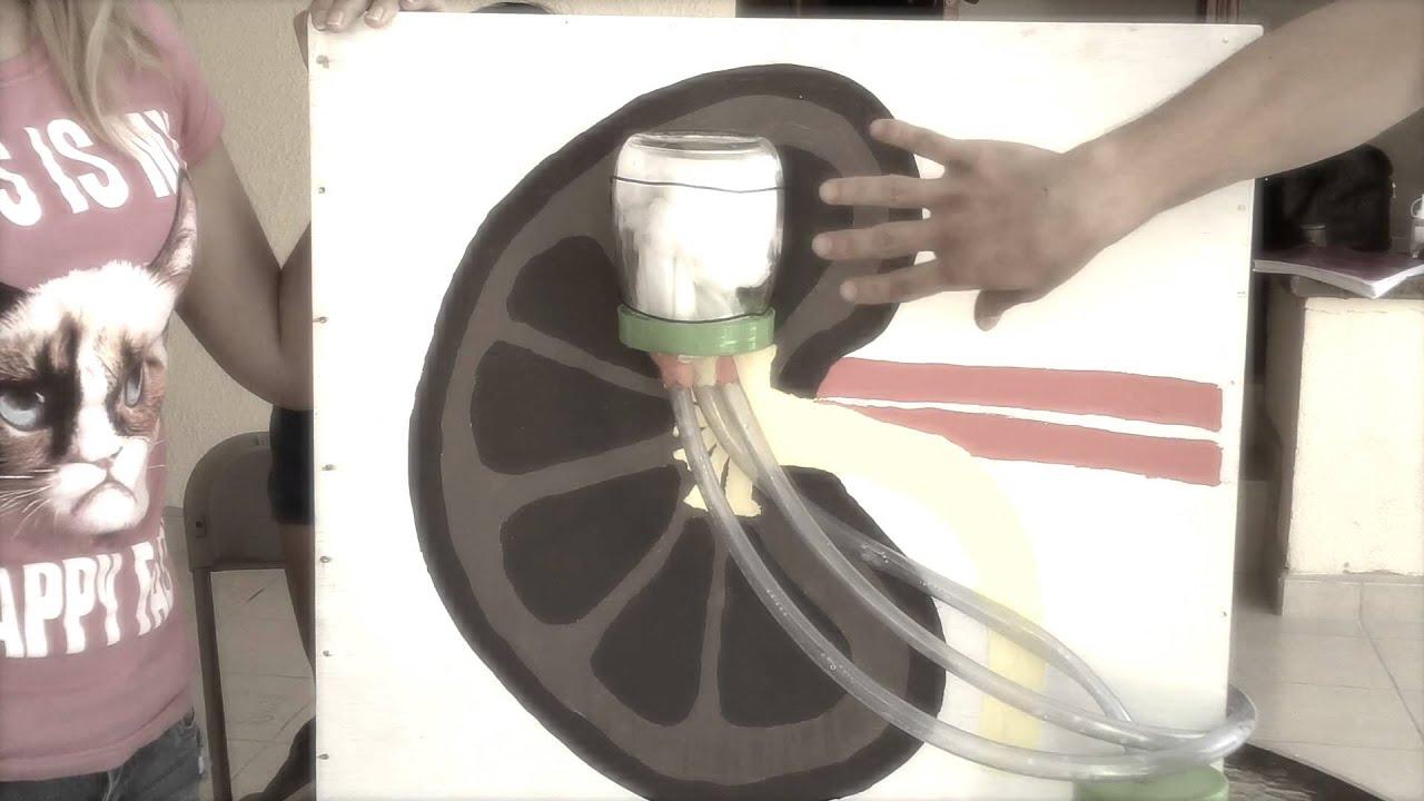Modelo Experimental Sistema Renal - YouTube