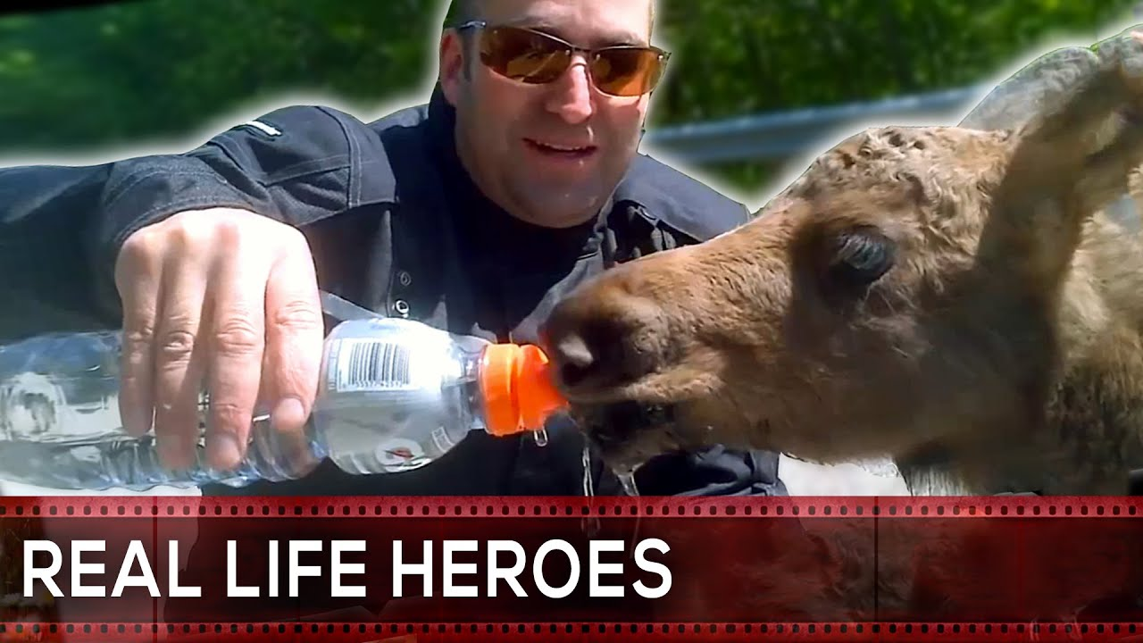 Animal Rescue Compilation REAL LIFE HEROES YouTube - 29 real life heroes