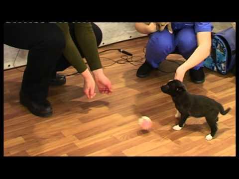 Кошарики как выбрать щенка