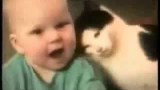 Веселые кошки Новая подборка