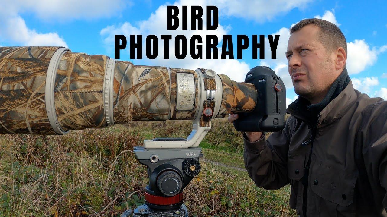 BIRD   WILDLIFE PHOTOGRAPHY   PHOTOGRAPHING BIRDS OF PREY   Hen Harriers, Falcons, Owls and Buzzards