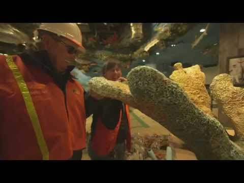 Bill Dance Tours Bass Pro Shops At The Pyramid In Memphis