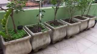 Pomar e Horta em Vasos na Varanda de Casa