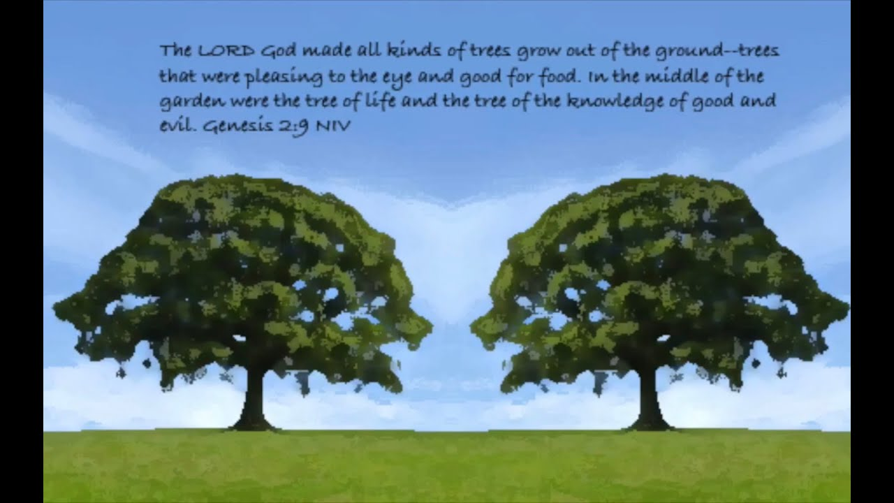 Two Trees in the Garden - Part 1