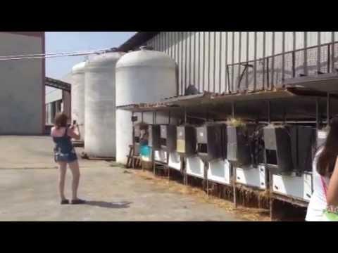 Экскурсия на итальянскую ферму