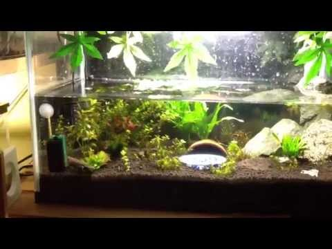 Time laps vid of my tiger salamander, fire belly newts, and