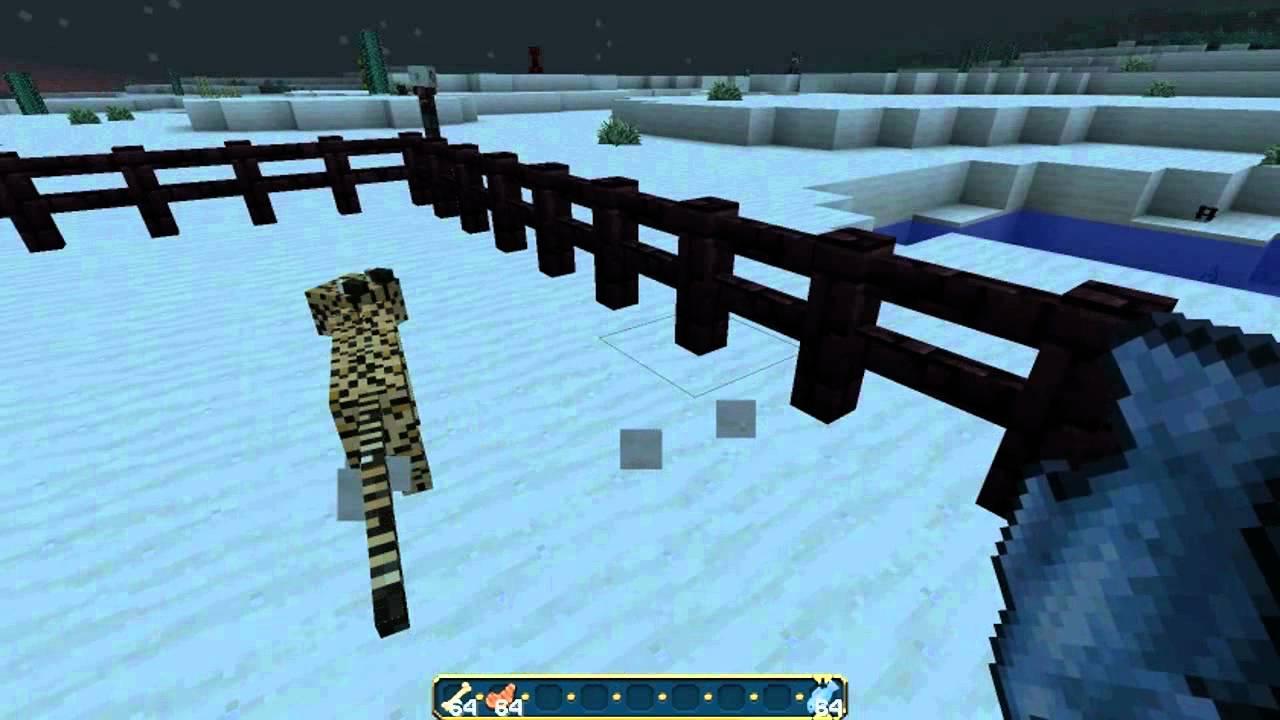 Youtube Minecraft Cat Vs Dog