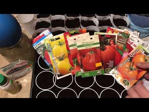 Посев томатов! Сезон 2020