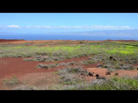 Off Road Jeep Driving on Lanai