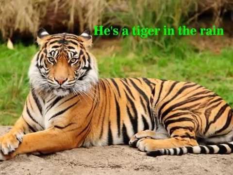 Tiger In The Rain - in lyrics  -  Michael Franks