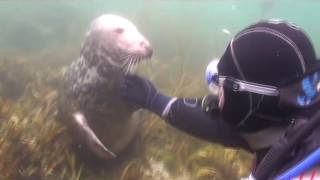 Дайвер не ожидал такого от тюленя. Никто не ожидал!