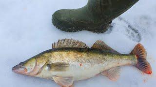 ЗИМНИЕ ТРОФЕИ 2020 СУДАКИ И САЗАНЫ  рыбалка зимой 2020