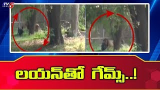 A Man Jumped Inside a Lion Enclosure in National Zoological Park | Delhi | TV5