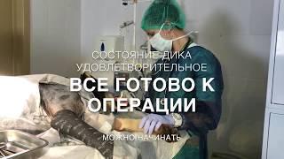 Доктор Вет. Ветеринария. Анестезия. Реанимация.