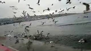 Dünyanin en güzel martı videoları ( WhatsApp durum için süper manzara)