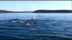 Orcas mit anderen Augen sehen!