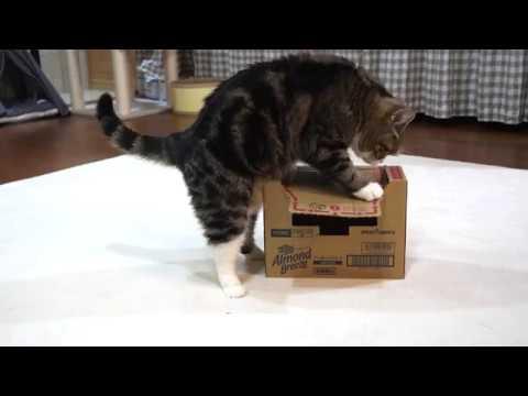箱に入りたかったねこ-maru-wanted-to-get-into-the-box