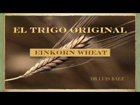 EL TRIGO ORIGINAL: EINKORN WHEAT