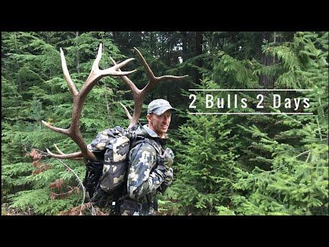 Elk Hunting Around Wolves / 2 Bulls 2 Days!!! - Stuck N The Rut 115
