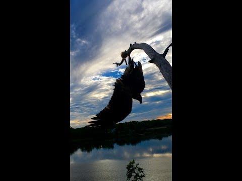 Eagle Rescue along the Connecticut River
