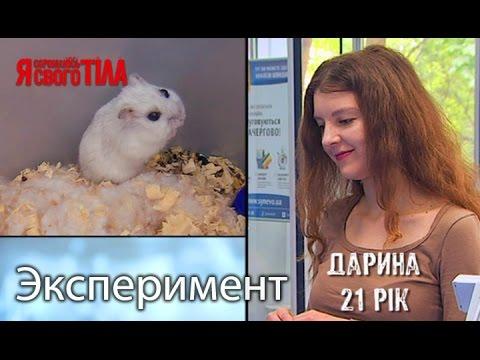 Эксперимент - Домашние животные - Cмотреть видео онлайн с youtube, скачать бесплатно с ютуба