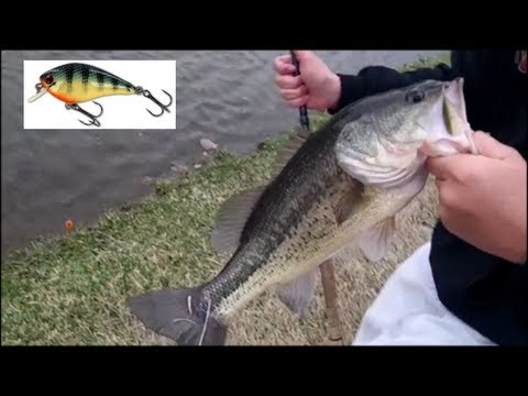 Squarebill Fishing: Stanford Cedar Lures- Patriot Shad