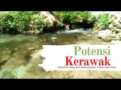 Potensi Mata Air Kerawak Desa Guo Terus Kecamatan Montong Tuban