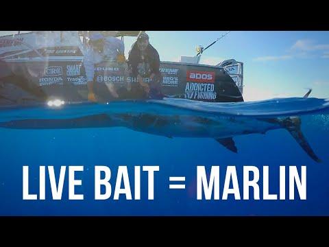 Marlin Mayhem with Kurt Bennetto (Season 4 Ep 1)
