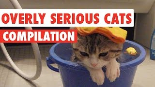 Overly Serious Cats Compilation 2016