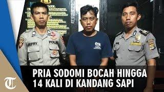 Gambar cover Pria 34 Tahun Sodomi Siswa SMP 14 Kali di Kandang Sapi, Terbongkar Ibu Korban saat Alarm Sahur