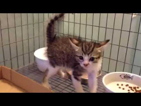 Kitten Growling Hissing Spitting Youtube
