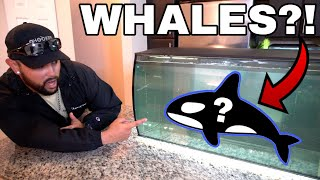 BABY BLUE WHALES IN FRESHWATER HOME AQUARIUM!!