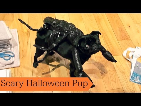 Scary Halloween Pup