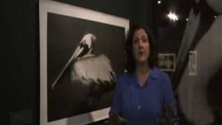 Artist Profile: Rosalie Winard