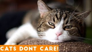 Cats Don't Care Funny Pets Videos | Ultimate Funny Cat Videos Ever