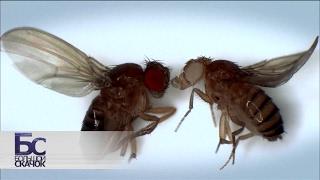 Великие мухи науки. Фильм 1 | Большой скачок