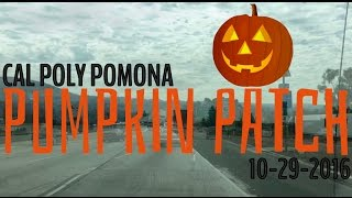 Pumpkin Patch 2016 (10-29-2016)