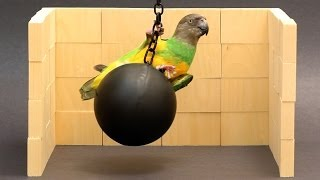 Kili Cyrus Wrecking Ball Parroty