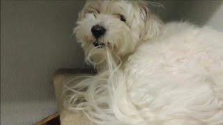 Dog from Hell a Groomer's Nightmare - EP 4 DOG INTERVENTION - BIG CHUCK MCBRIDE