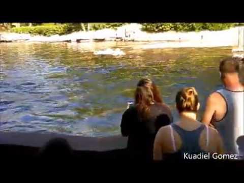 Delfín le roba  iPad a una mujer que le tomaba fotografías