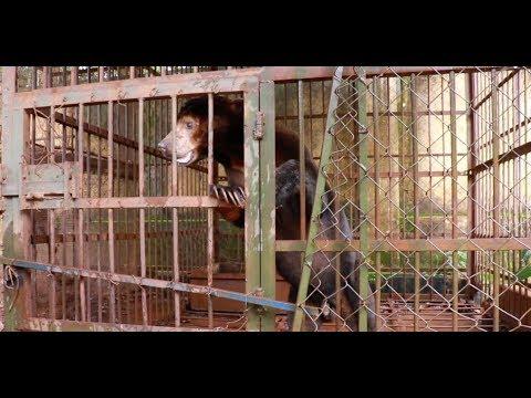 In just a year, sun bear Kaffe has overcome nearly a decade of cruelty