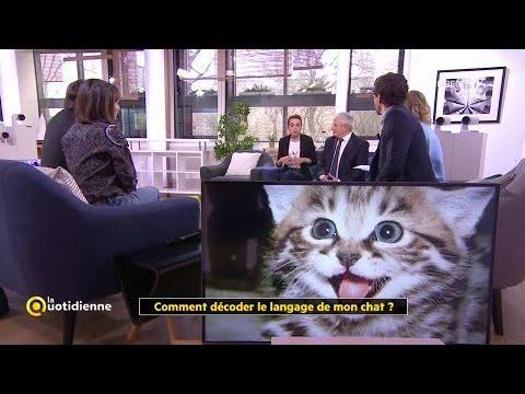 Comment Décoder Le Langage De Mon Chat ?