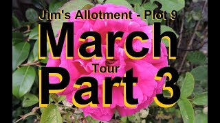 Jim's Allotment - Plot 9 - March Tour Part 3 - Peppers, Chilies and Cauliflowers