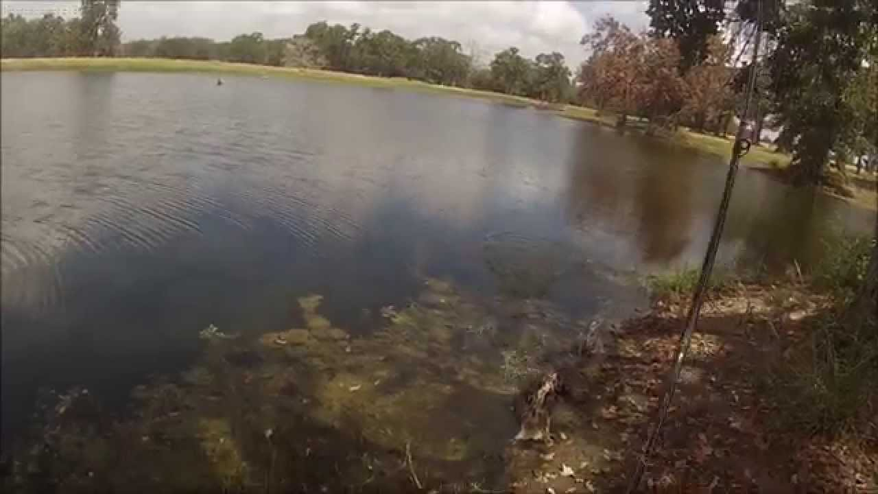 Stocked pond bass fishing gopro 1080hd youtube for Stocked fishing ponds