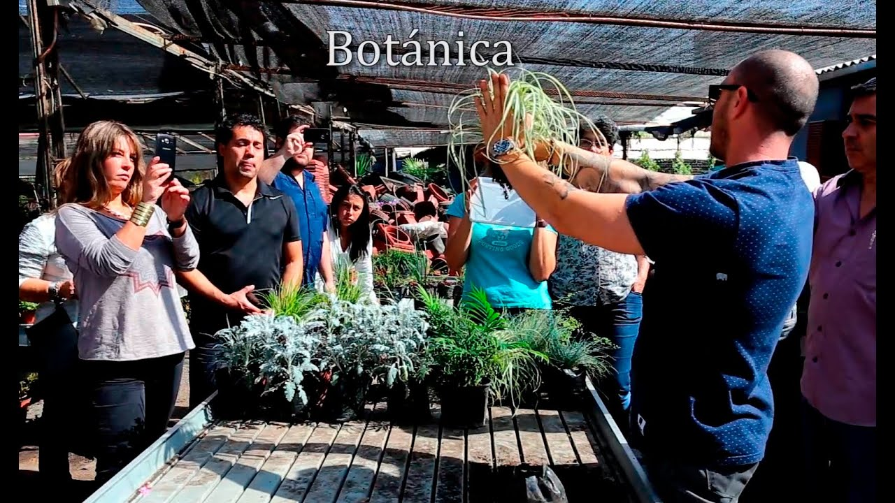 Curso de jardines verticales en chile 2015 youtube for Jardines verticales chile