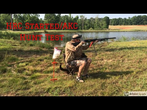 How To Run A HRC Started/AKC Junior Hunt Test