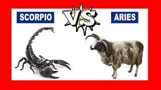 Scorpio vs. Aries: Who Is The Strongest Zodiac Sign?