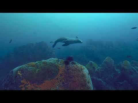 Scuba Diving on Aumentos Reef in Monterey, CA